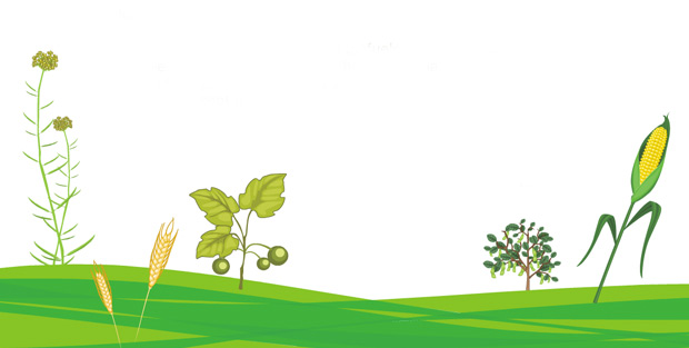 _Understanding-Biofuels-0
